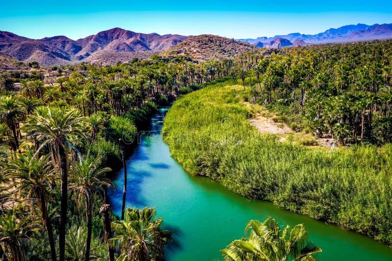 Ποταμός που τρέχει μέσω μιας όασης σε Mulege, Baja, Μεξικό στοκ εικόνα