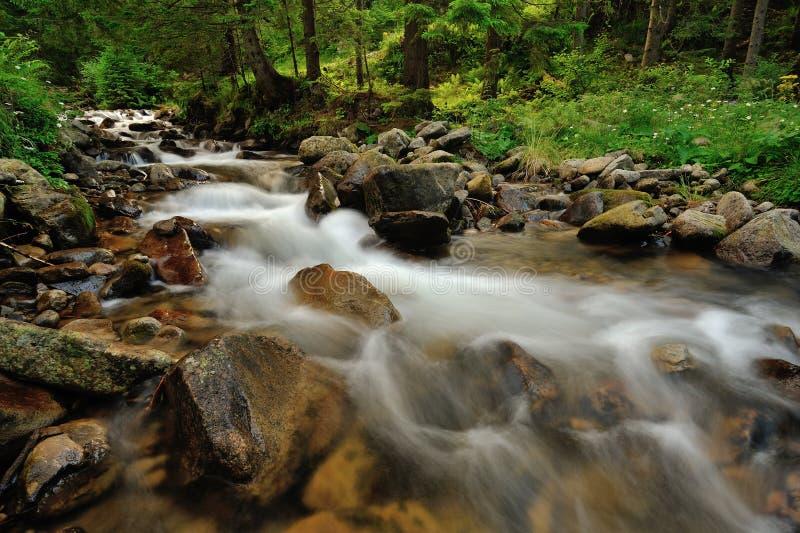Ποταμός στα βουνά στοκ εικόνες