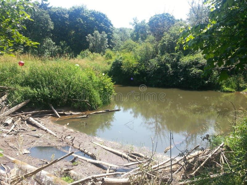 Ποταμός στα ξύλα που πλησίον το δυτικό Σάσσεξ στοκ φωτογραφίες
