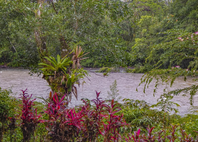 Ποταμός στην Αμαζονία σε Puyo, Ισημερινός στοκ εικόνα με δικαίωμα ελεύθερης χρήσης