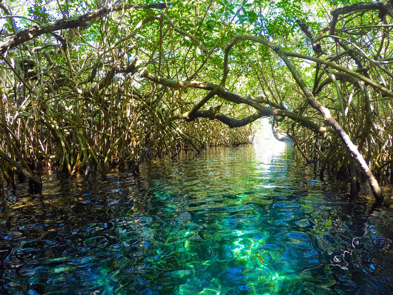Ποταμός στη ζούγκλα με τα μαγγρόβια στοκ φωτογραφία