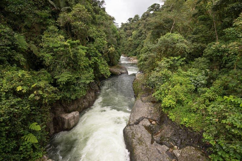 Ποταμός στη ζούγκλα του Ισημερινού στοκ εικόνα με δικαίωμα ελεύθερης χρήσης