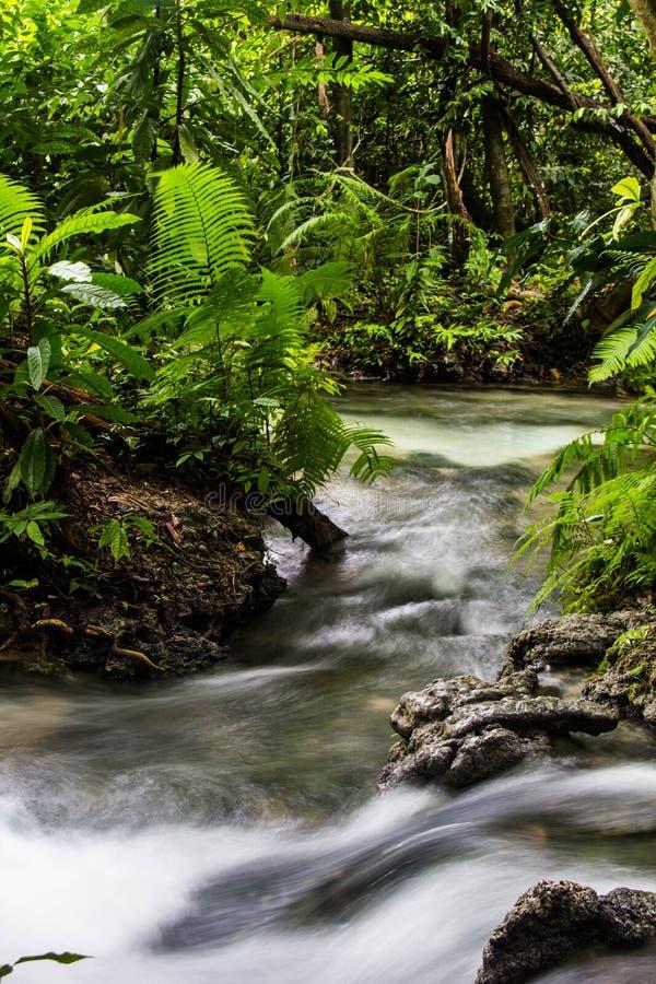 Ποταμός στο δάσος στοκ εικόνα