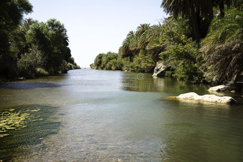 Ποταμός στο δάσος στοκ φωτογραφίες με δικαίωμα ελεύθερης χρήσης