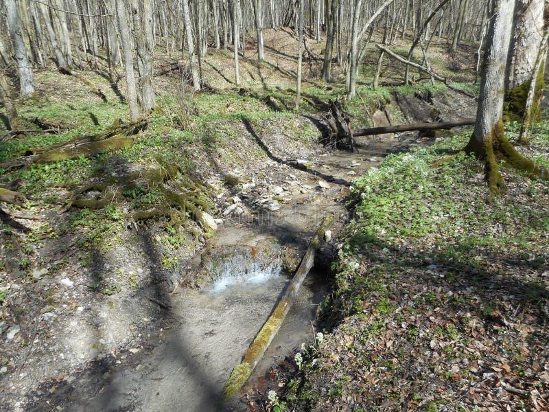 Ποταμός στο δάσος την άνοιξη στοκ φωτογραφία με δικαίωμα ελεύθερης χρήσης
