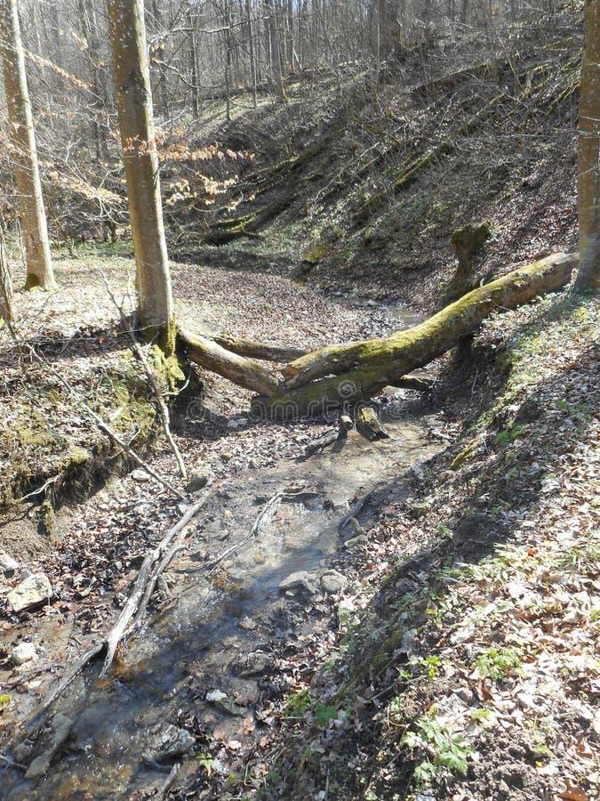 Ποταμός στο δάσος την άνοιξη στοκ εικόνα με δικαίωμα ελεύθερης χρήσης