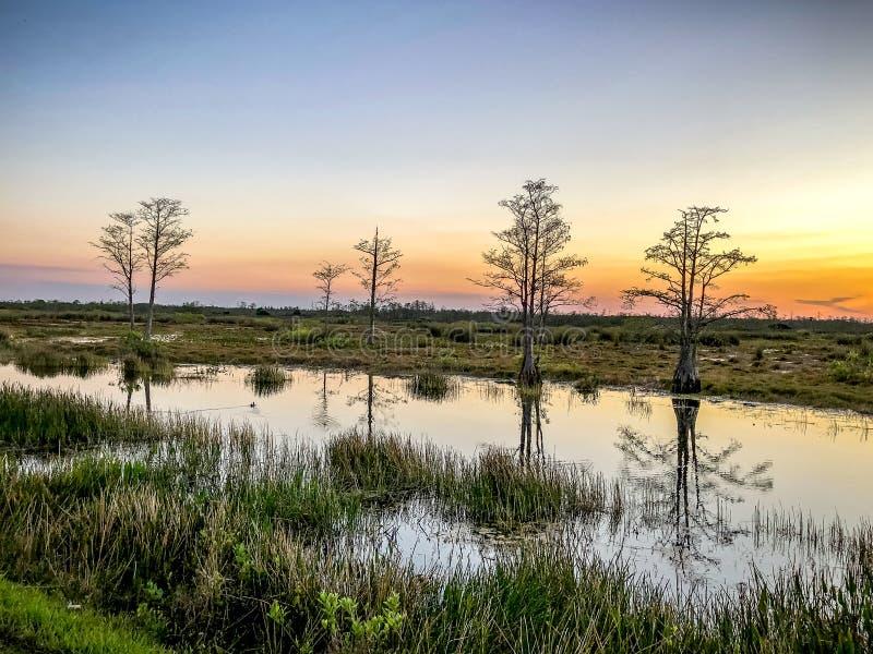 ποταμός στο ηλιοβασίλεμα στο έλος στοκ εικόνα