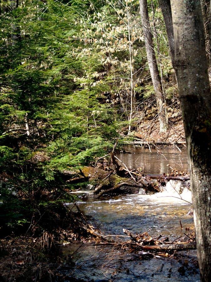 Ποταμός στο κρατικό πάρκο Νιού Χάμσαιρ ρυακιών αρκούδων στοκ εικόνα