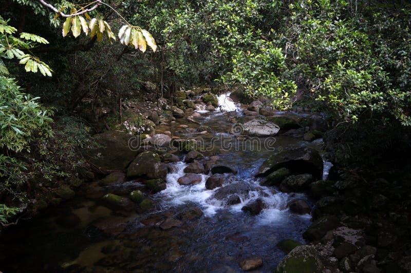 Ποταμός στο τροπικό δάσος στοκ εικόνες με δικαίωμα ελεύθερης χρήσης