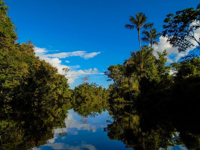 ποταμός της Αμαζώνας στοκ φωτογραφία με δικαίωμα ελεύθερης χρήσης