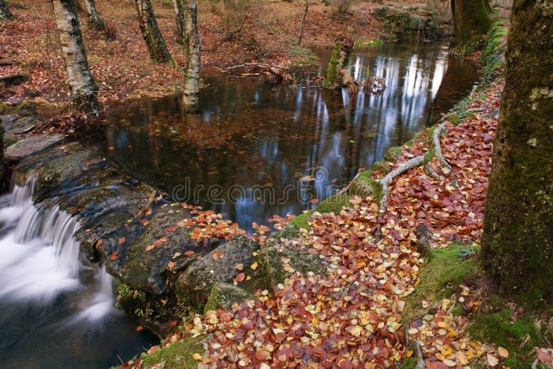 Ποταμός το φθινόπωρο στοκ εικόνες