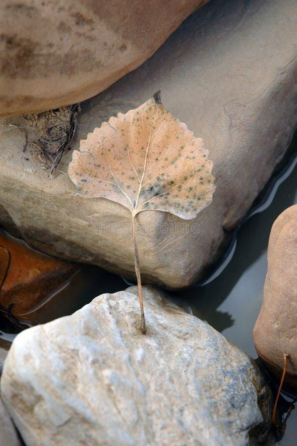 ποταμός φύλλων στοκ εικόνα με δικαίωμα ελεύθερης χρήσης