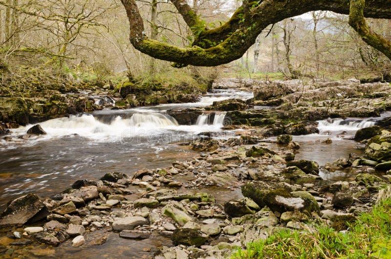Ποταμός Dundonnell κάτω από το δέντρο στοκ φωτογραφίες με δικαίωμα ελεύθερης χρήσης