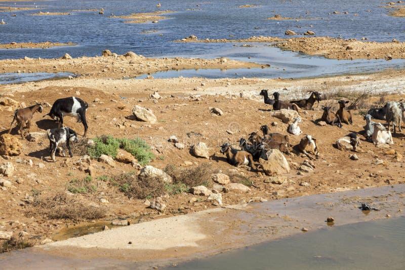 Ποταμός EL Hamra Saguia σε Laayoune στοκ φωτογραφία