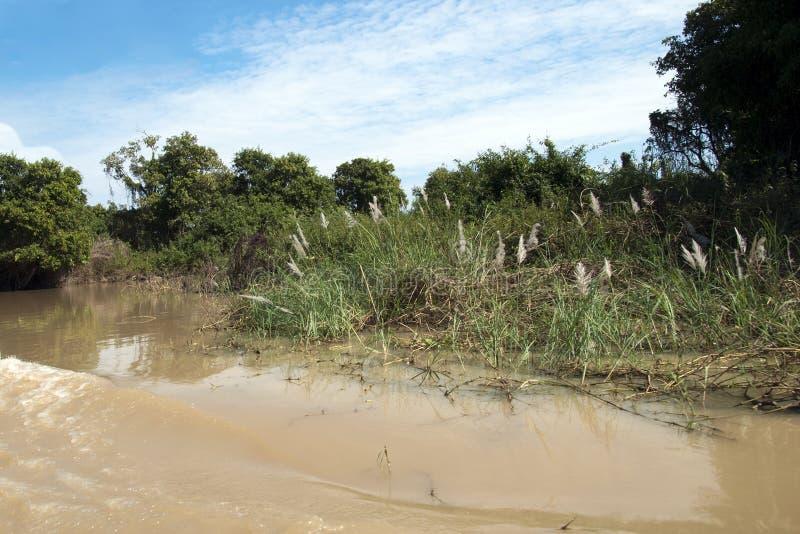 Ποταμός Sangker, φυσική σκηνή riverbank στοκ φωτογραφία