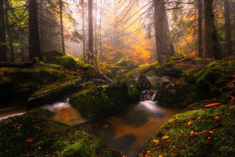 Ποταμός Vitosha στο βουνό στοκ εικόνες με δικαίωμα ελεύθερης χρήσης