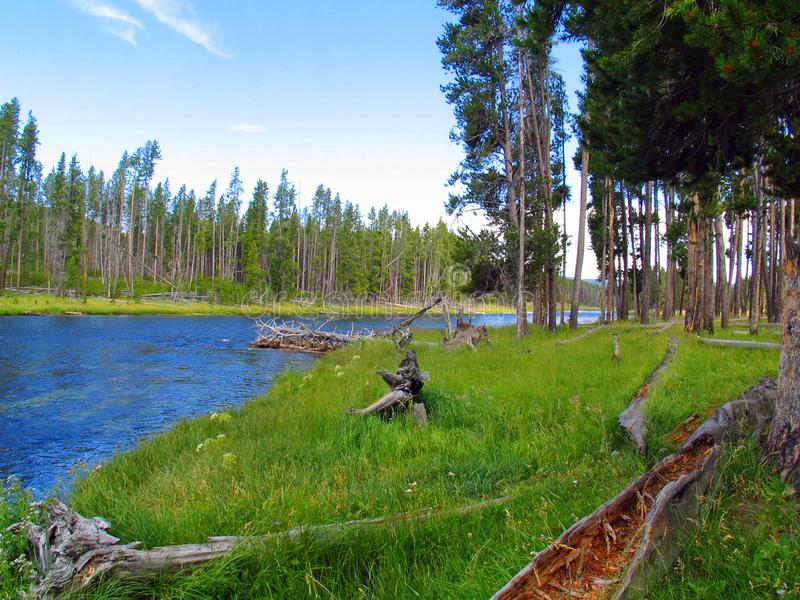Ποταμός Yellowstone που κοιτάζει πίσω στη λίμνη Yellowstone στοκ εικόνες με δικαίωμα ελεύθερης χρήσης