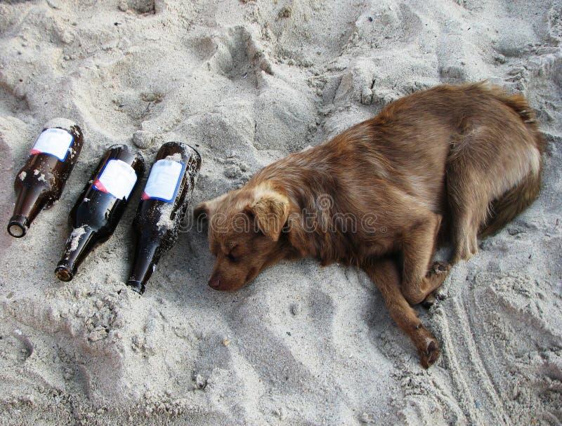 ποτό σκυλιών στοκ εικόνες