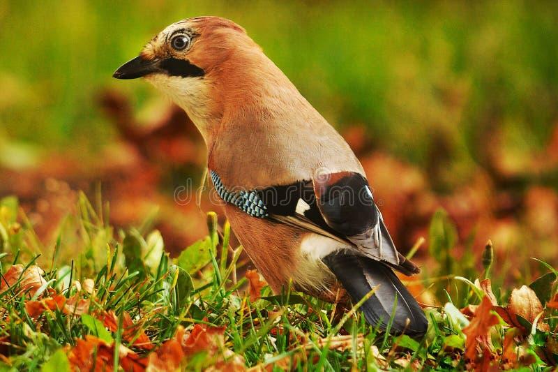 πουλί έκπληκτο στοκ εικόνα
