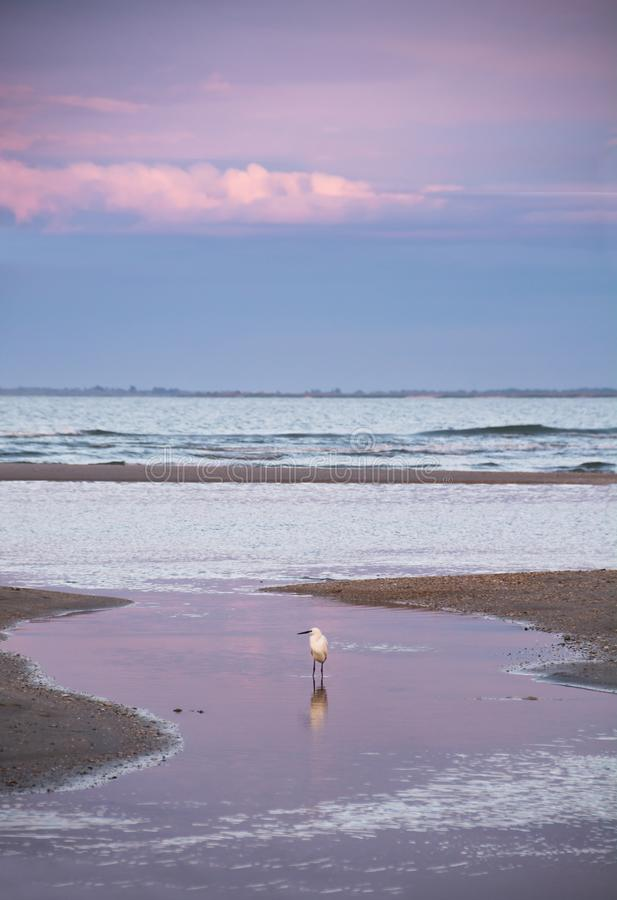 Πουλί ερωδιών στον κόλπο θάλασσας στο ηλιοβασίλεμα, μια αντανάκλαση του ροζ στο νερό στοκ φωτογραφία