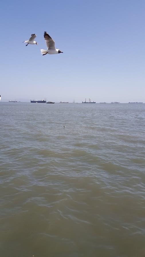 Πουλί θάλασσας στοκ φωτογραφίες με δικαίωμα ελεύθερης χρήσης