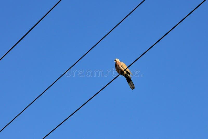 Πουλί και μπλε ουρανός Στοκ Εικόνες