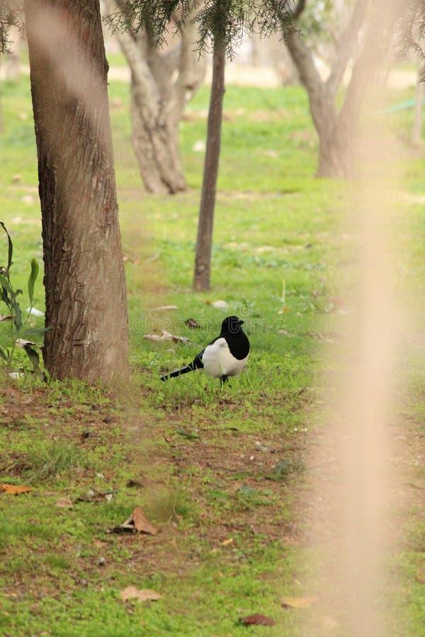 πουλί μόνο στοκ φωτογραφία