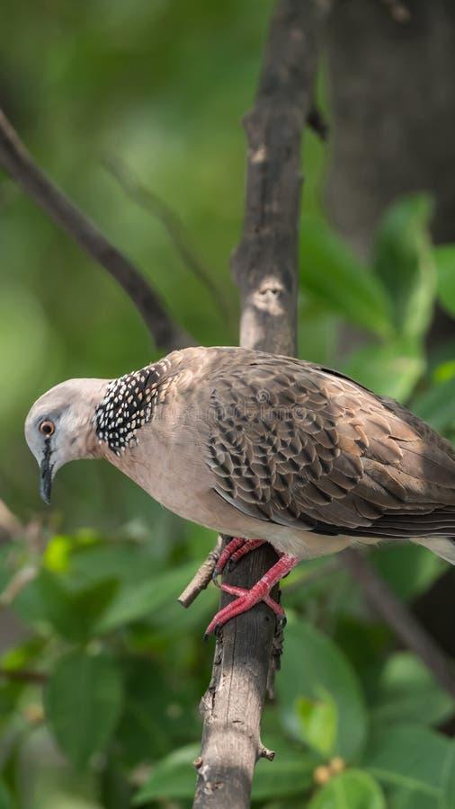 Πουλί (περιστέρι, περιστέρι ή αποσαφήνιση) σε μια φύση στοκ εικόνες