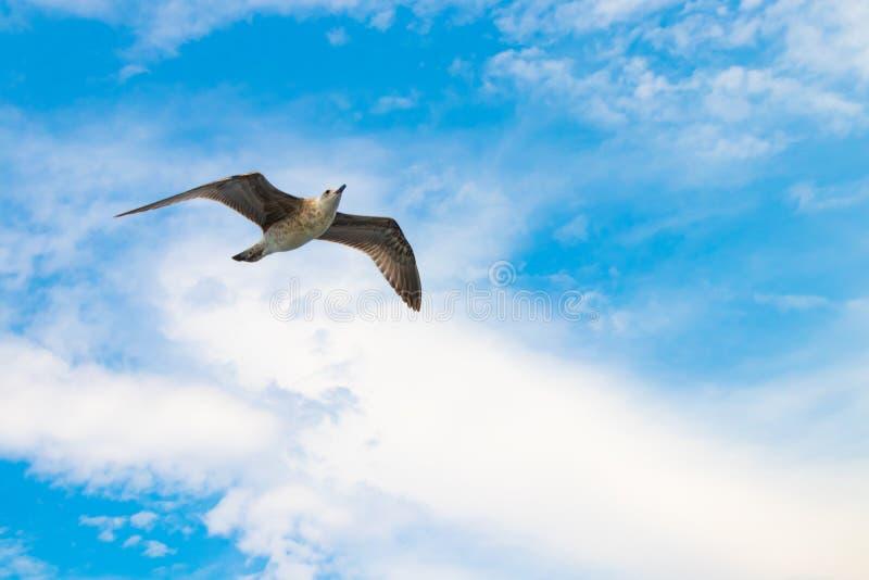 Πουλί που πετά σε έναν όμορφο νεφελώδη, ηλιόλουστο μπλε ουρανό στοκ εικόνες