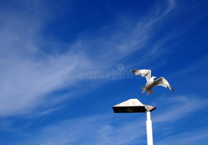 Μεγάλο πουλί Πις