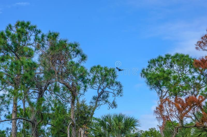 πουλί που πετά το έλος ι στοκ φωτογραφία