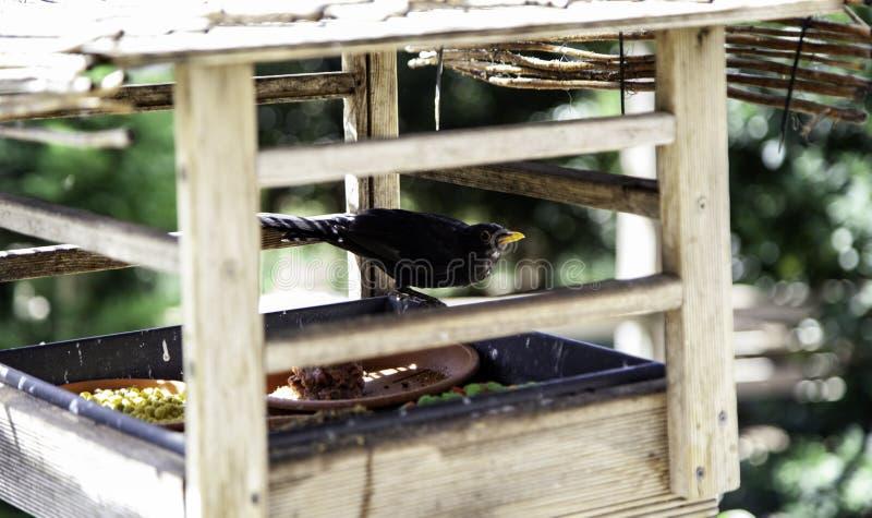 Πουλί που στη φωλιά στοκ φωτογραφίες