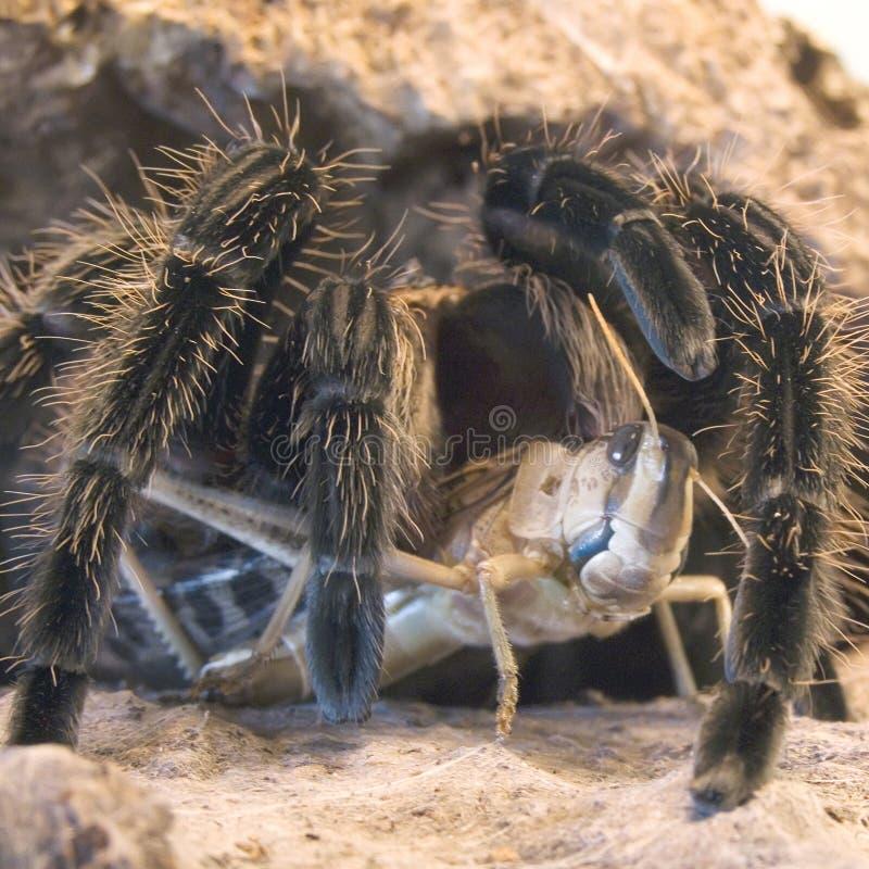 πουλί που τρώει την αράχνη στοκ φωτογραφίες με δικαίωμα ελεύθερης χρήσης