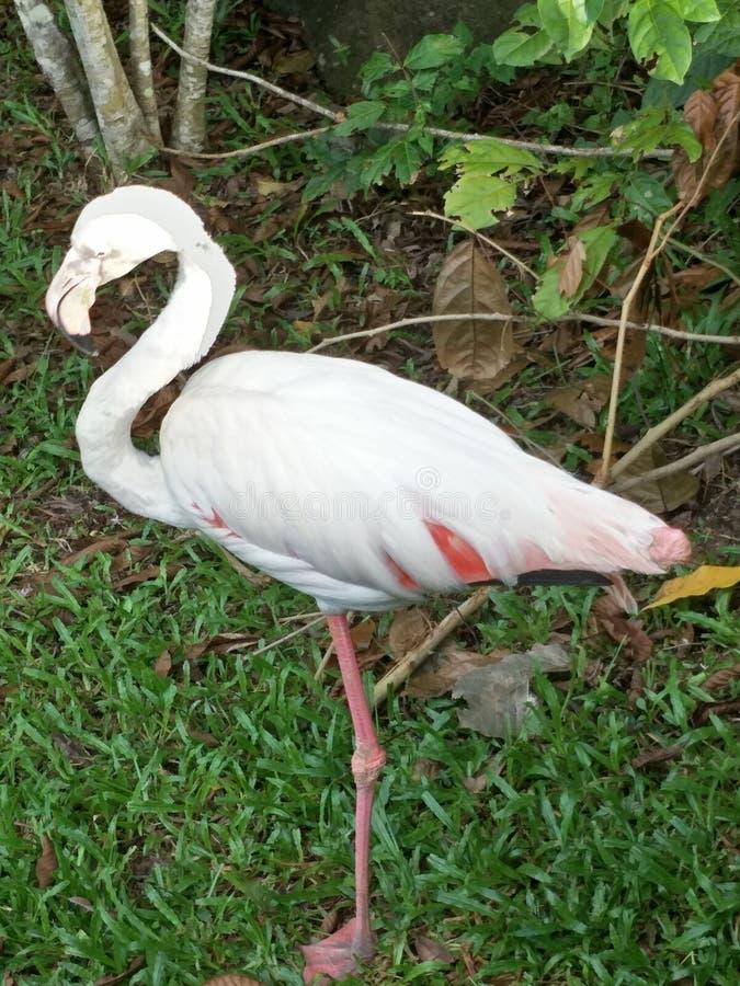 Πουλί σε έναν ζωολογικό κήπο στοκ φωτογραφία με δικαίωμα ελεύθερης χρήσης
