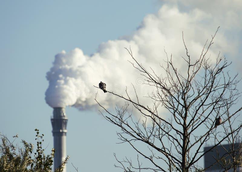 Πουλί σε έναν κλάδο κοντά σε μια καπνίζοντας καπνοδόχο που παράγει τα αέρια θερμοκηπίων στοκ φωτογραφίες