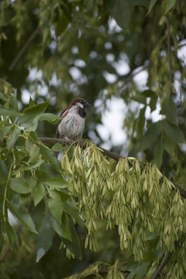 Πουλί σε ένα δέντρο 2 στοκ εικόνα με δικαίωμα ελεύθερης χρήσης