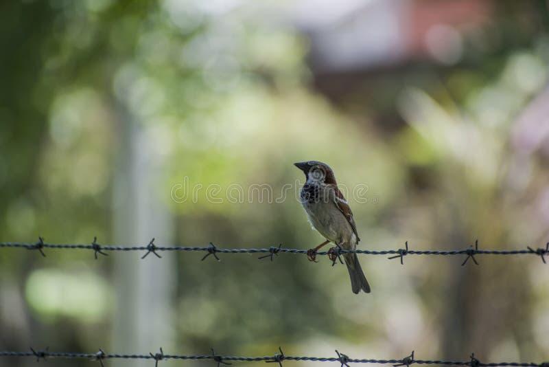 Πουλί σε μια καλωδίωση στοκ φωτογραφίες