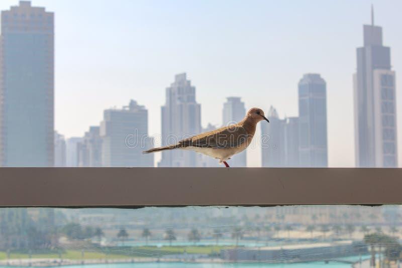Πουλί σε μια πόλη δίπλα στα κτήρια και τους πύργους ουρανοξυστών στοκ φωτογραφία με δικαίωμα ελεύθερης χρήσης