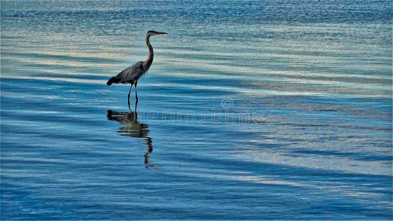 Πουλί στη θάλασσα στη θάλασσα στοκ εικόνες