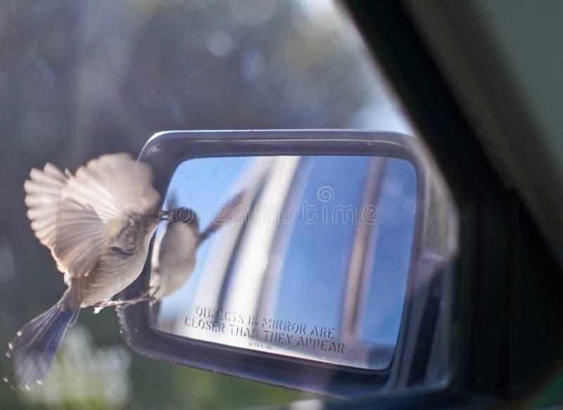 Πουλί στον οπισθοσκόπο καθρέφτη στοκ φωτογραφία με δικαίωμα ελεύθερης χρήσης