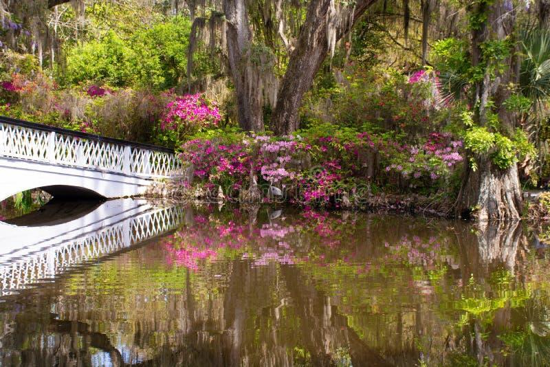 Πουλί στον όμορφο ανθίζοντας κήπο από τη λίμνη στοκ εικόνες με δικαίωμα ελεύθερης χρήσης
