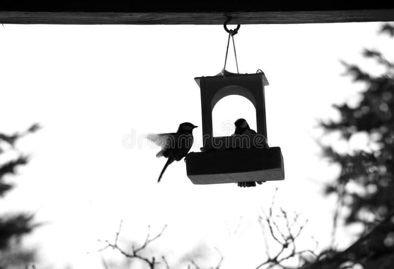Πουλί στους τροφοδότες πουλιών στοκ φωτογραφίες με δικαίωμα ελεύθερης χρήσης