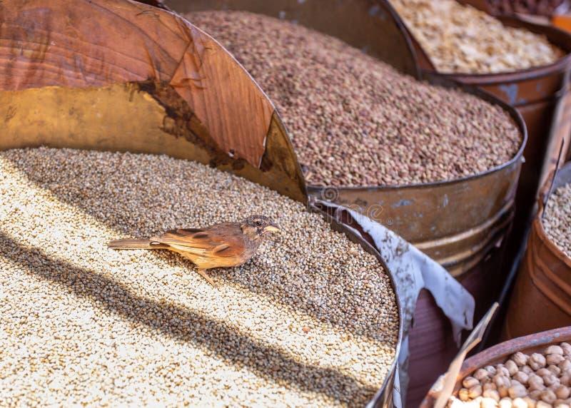 Πουλί στο σωρό των σπόρων καλαμποκιού στοκ φωτογραφία με δικαίωμα ελεύθερης χρήσης