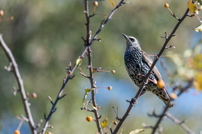 Πουλί τραγουδιού στη φύση στοκ εικόνες