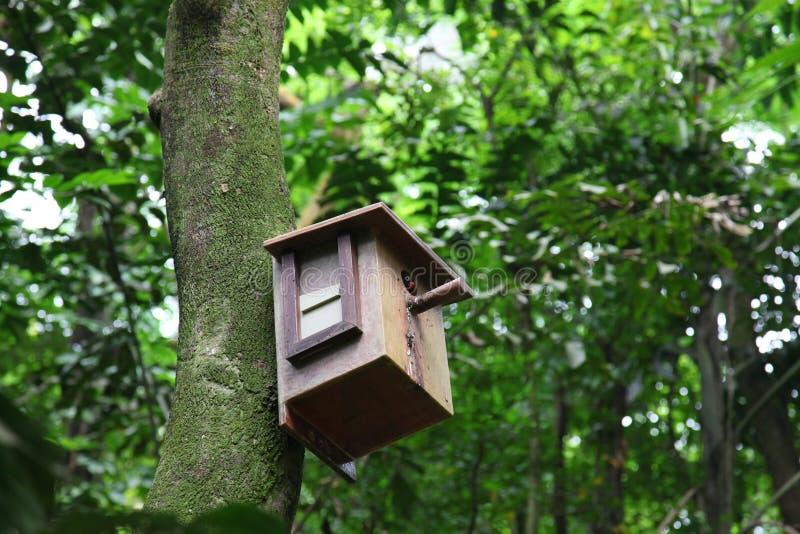 πουλί birdhouse μέσα στοκ εικόνες με δικαίωμα ελεύθερης χρήσης