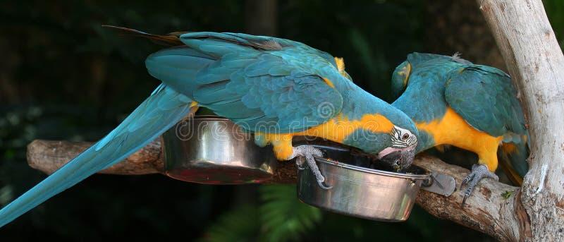 πουλί macaw στοκ φωτογραφία με δικαίωμα ελεύθερης χρήσης