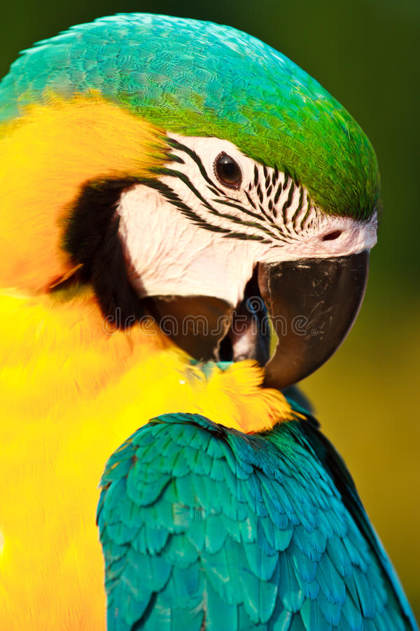 πουλί macaw στοκ εικόνα