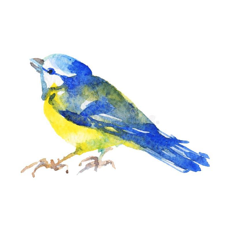 Πουλί Watercolor titmouse απεικόνιση αποθεμάτων