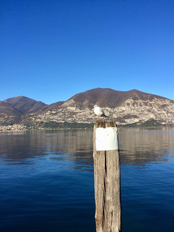 πουλιά αποκαλούμενα seagull laridae οικογενειακών γλάρων ανεπίσημα συχνά seagulls στοκ φωτογραφίες με δικαίωμα ελεύθερης χρήσης
