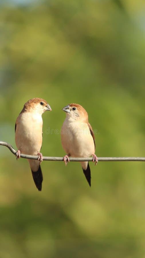 πουλιά ζευγών στοκ φωτογραφία με δικαίωμα ελεύθερης χρήσης